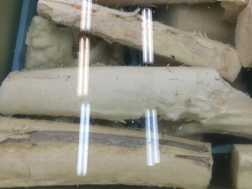 大きい骨を解凍するために短くした骨です。